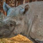 Folly Farm – Adventure Park & Zoo